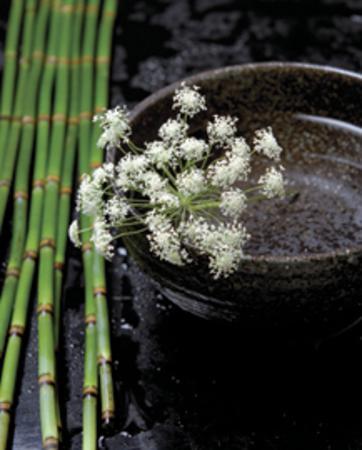 Printemps de Bambous