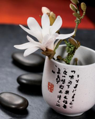 Composition Zen : Magnolia Stella