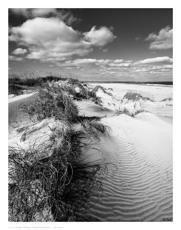 Dune Swale