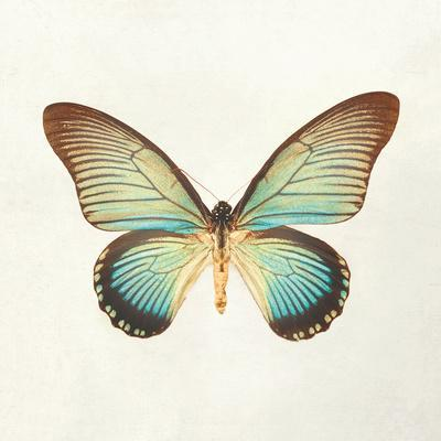 Butterfly Impression II