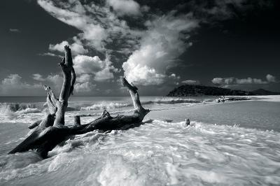 Driftwood Shore