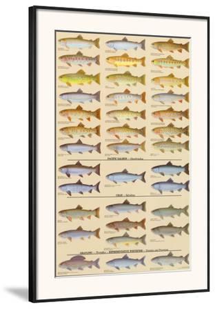 Trout, Salmon & Char of North America II