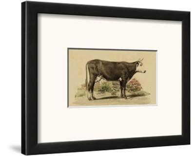 Antique Cow IV