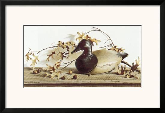 Chesapeake Bay Canvasback Prints by Pauline Eblé Campanelli at ...