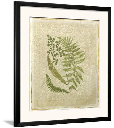 Crackled Ferns II