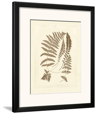Sepia Ferns II