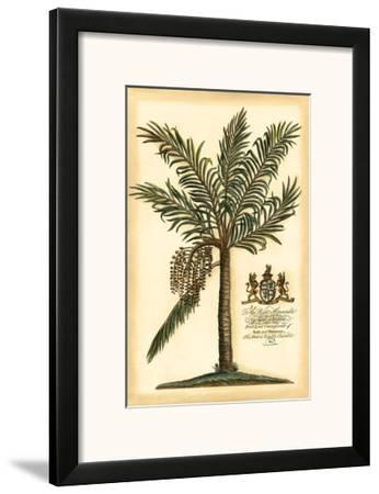 British Colonial Palm II