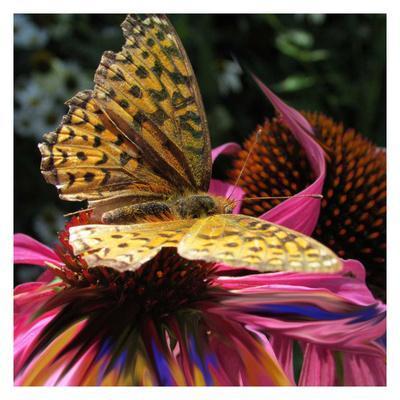 Floral Wonders 2
