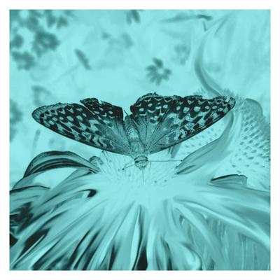 X-Ray Butterfly 4