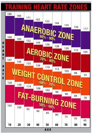 Training Heart Rate Zones Chart (Bright)