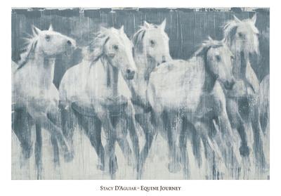 Equine Journey