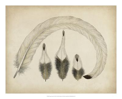 Vintage Feathers IV