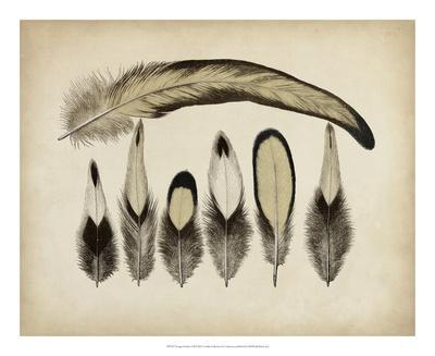 Vintage Feathers VII