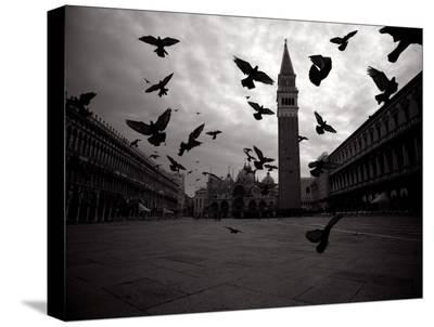Pigeons, Venice Italy