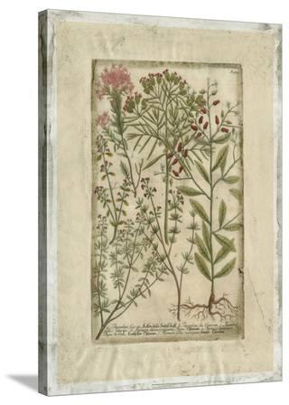 Garden Varietals I