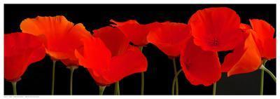 Vermilion Poppies