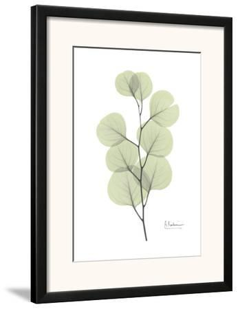 Eucalyptus in Pale Green