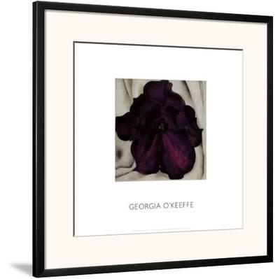 Purple Petunia, 1925