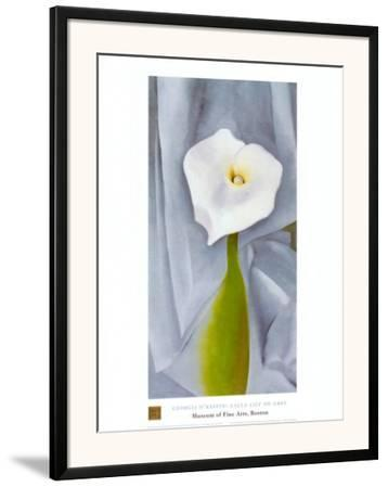 Calla Lilly On Grey