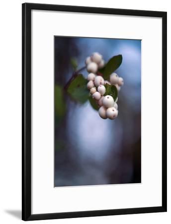 Winterberries 2