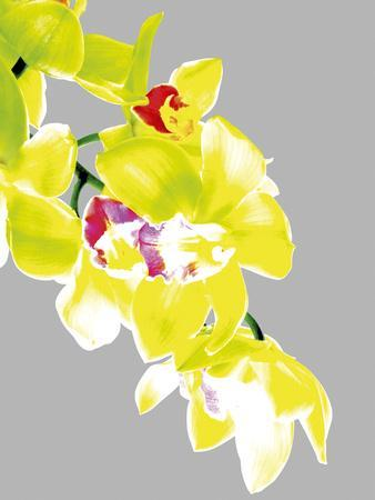 Neon Orchid I