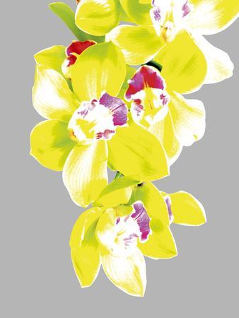 Neon Orchid II
