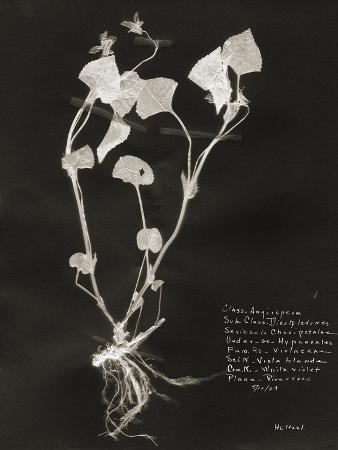 Botanical Collector I