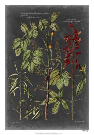 Vintage Botanical Chart III