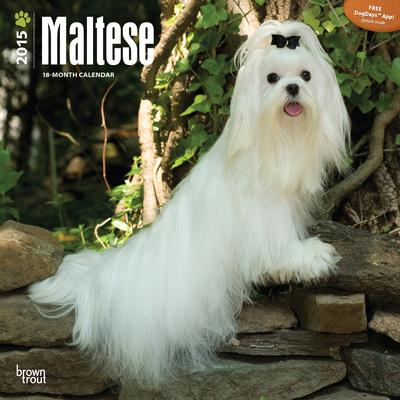 Maltese - 2015 Calendar
