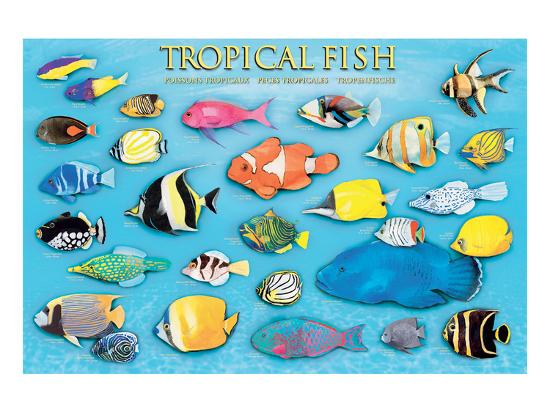 metal fish art wall decor.htm tropical fish  art allposters com  tropical fish  art allposters com
