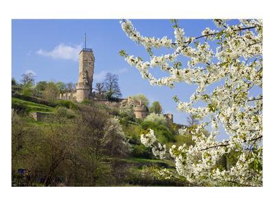 Wachtenburg Castle Ruins in Wachenheim near Bad Duerkheim, Rhineland-Palatinate, Germany