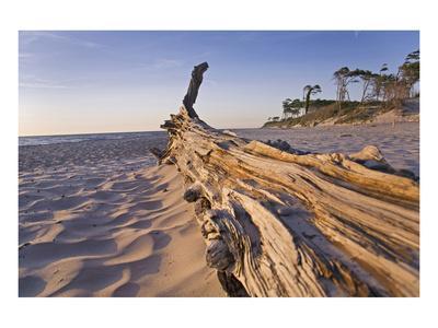 West Beach near Prerow, Fischland-Darss-Zingst, Mecklenburg-Western Pomerania, Germany