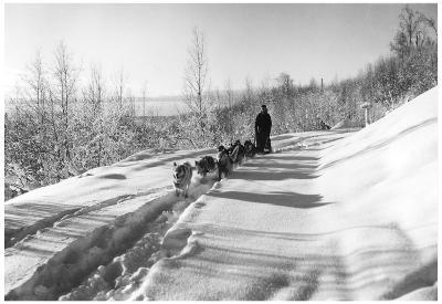 Mushing a Dog Sled in Alaska Photograph - Alaska