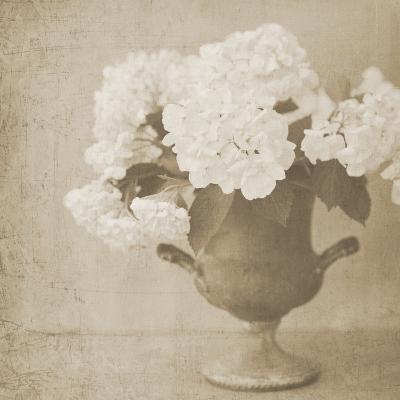 Vintage Hydrangeas