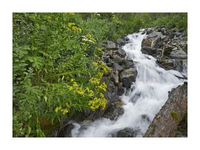 Creek near Silverton, Colorado