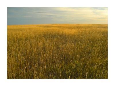 Upper prairie in Badlands National Park, South Dakota