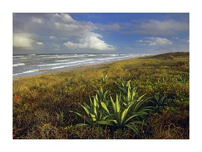 Apollo Beach at Canaveral National Seashore, Florida