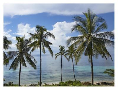 Coconut Palm trees, Bikini Beach, Panglao Island, Philippines