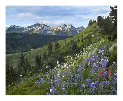Wildflowers and Tatoosh Range, Mount Rainier National Park, Washington