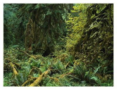 Lush vegetation in the Hoh Rain Forest, Olympic National Park, Washington