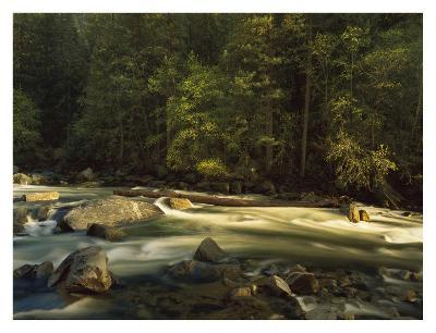 Merced River flowing through the valley floor, Yosemite National Park, California