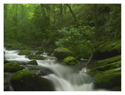 Roaring Fork River flowing through the Great Smoky Mountains National Park, Tennessee