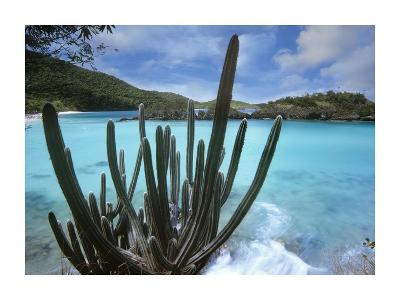 Cactus growing along Trunk Bay, Virgin Islands