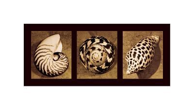 Shell Trio