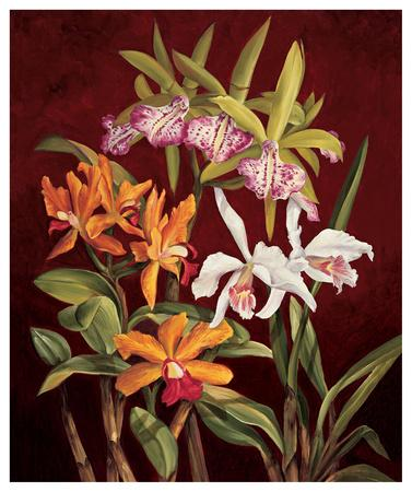 Orchid Trio II