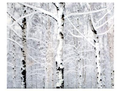 Birch Forest Winter