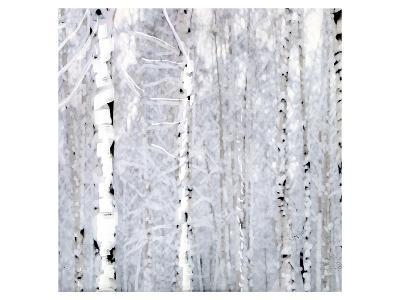 Birch Wonderland