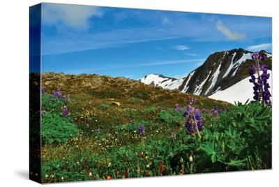 Alaska USA V