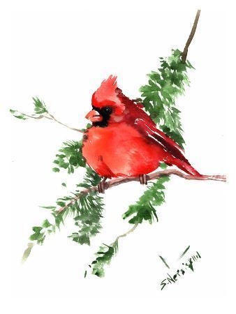 Red Cardinal 3