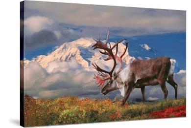 Natural Splendors Alaska II